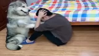 Dog helps owner with abdominal muscle exercises