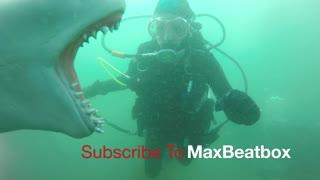 Shark Bait! 😂