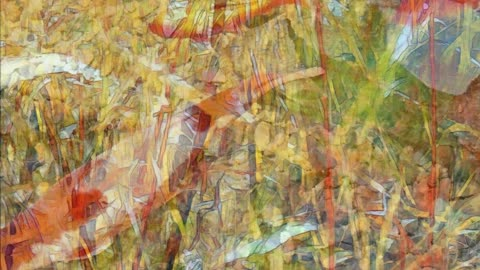 Transformations: Photographic Abstractions