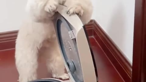Smart dog can boil eggs