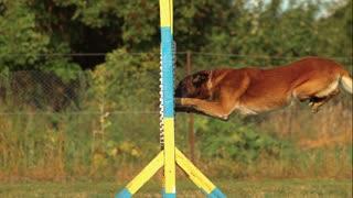 adorable dog training