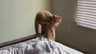cat fighting with the owner