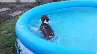 Dog loves to swim