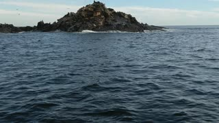 Great White Shark Attacks Fishing Boat