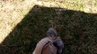 Jasper outside