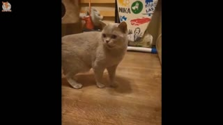 Happy Cats Compilation - Cutest Cat Ever 2021