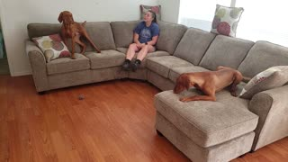 Puppies Get A New Couch