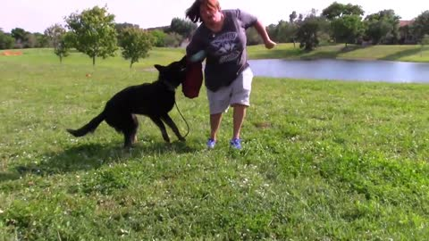 Learn Step by Step Training for Guard Dog!