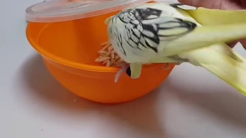 Birds Trying To Open the Food Jar