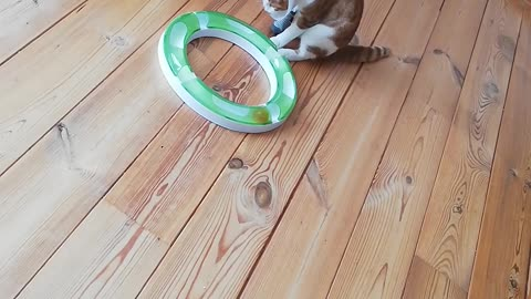Get this off my paw!