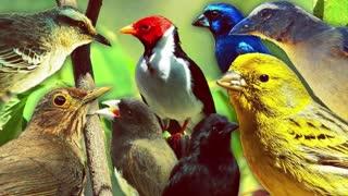 CALM PIANO MUSIC WITH BACKGROUND BIRDS SOUND TO SLEEP