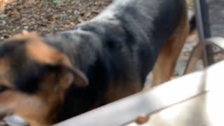 Cute Texas Dog
