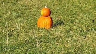Autumns exploding pumpkin 🎃