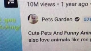 Most fun animals