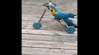 Baby Animals 🔴 Funny Parrots and Cute Birds Compilation
