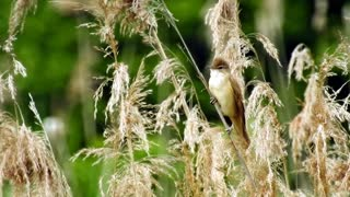 A beautiful bird among the trees singing in a naive voice
