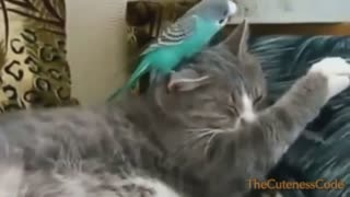 Compilation of Birds Playing with Cats