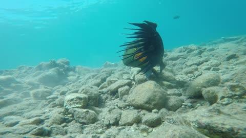 Fish swim in the Red Sea, colorful fish, Eilat Israel 8