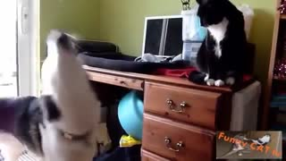 Cats and Dogs Meeting Reactions
