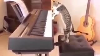 Cat Plays PIANO 😍😂
