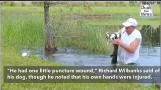 Florida man jumps into water and rescues his puppy from an alligator