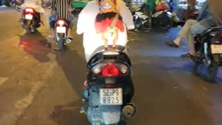 Dog Riding on Motorcycle in Style