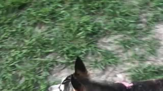 People who can't control their dog at a dog park