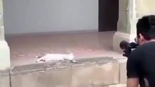 kittens of world