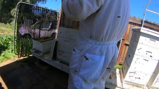 First hive opened Apr 1,2020 Part 1