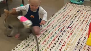 Monkey and Baby Share Their Toys