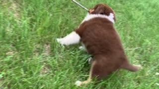 Tucker as a pup
