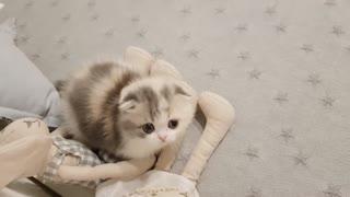 Cute Kitten Video Amazing Video