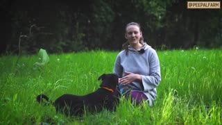 Choosing the right dog - Advice on what to consider
