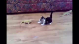video about a cat