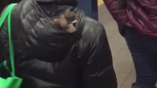 Woman has three rats in hood of black jacket