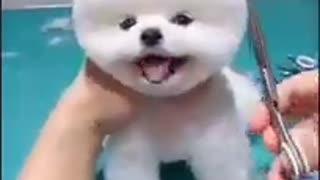 Cute little dog video