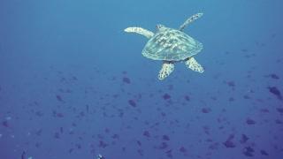 Underwater Turtle -life underwater