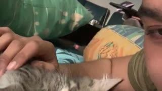 Adorable Kitten Begs for Kisses
