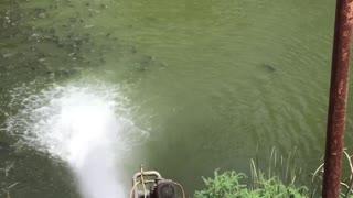 Fish Flock to Fresh Water