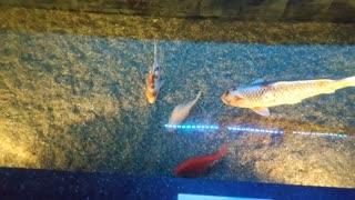 Beautiful colorful fish.