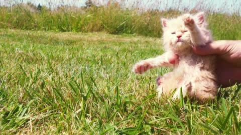Animal, kitten, cute, outdoors, nature, cat, domestic animal,