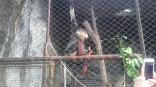 sly monkey