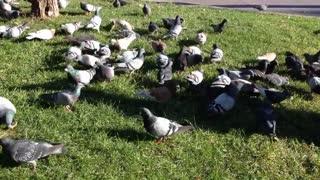 BIRD FEAST.