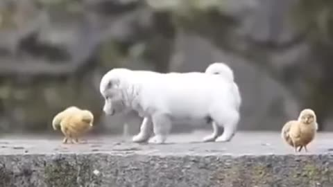 cute puppy playing :)