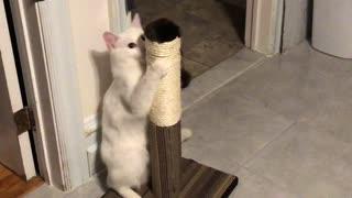 Deaf cat having fun
