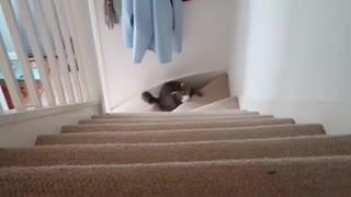 Gatito muestra increíble habilidad para atrapar cosas