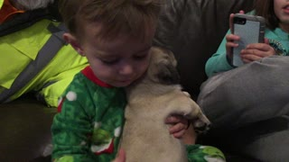 Baby holding baby pug puppy