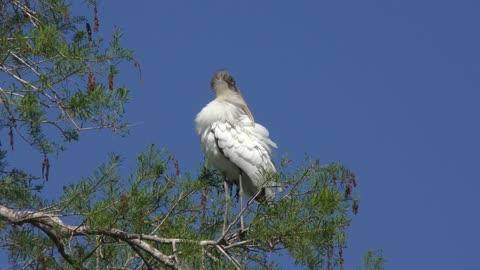 wood stork perching on a tree