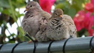 Bird couple with baby