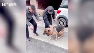 🤯Amazing😲--🐕Former Police Dog 'Cries' After Reuniting With Handler She Hasn't Seen For Years
